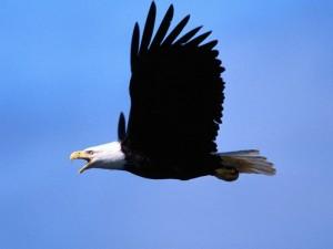 Способность птиц к навигации