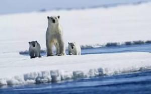 Арктический проект: экономическое измерение